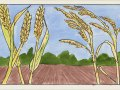 parable-wheat-1